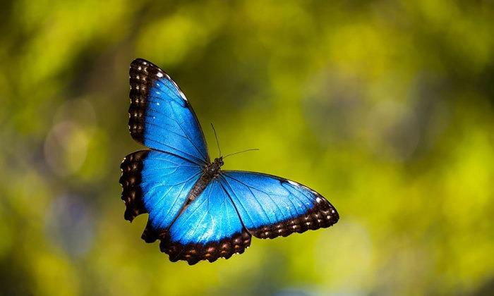 Wat als een vlinder kan praten?