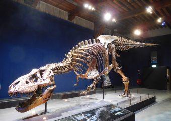 Wat als dinosaurussen nog steeds zouden bestaan?