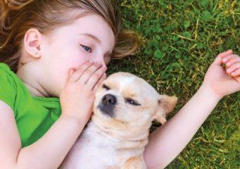 Wat als wij de dieren konden begrijpen?