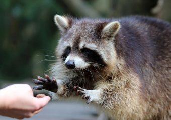 Wat als je nuttige dierenweetjes weet?